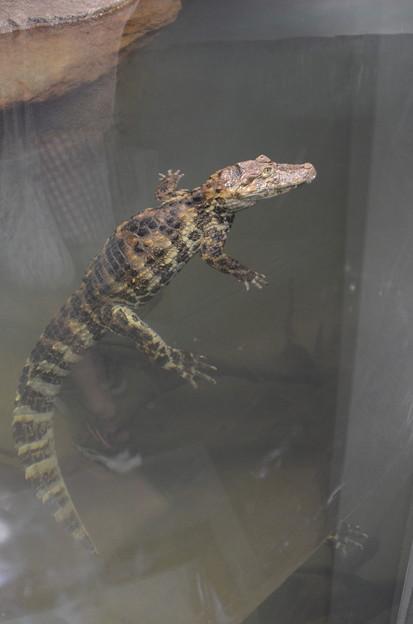 は虫類館 日本平動物園 2014 09 14