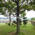 「クヌギ」と書かれているコナラの木