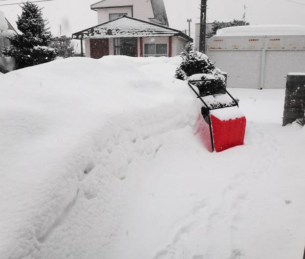 写真: 午前中の積雪は15センチほど!