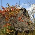 写真: 久万高原の茅葺屋根