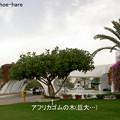 Photos: 朝のホテル