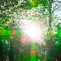 Photos: 緑の太陽