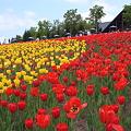Photos: 20100605_130942_滝野すずらん丘陵公園