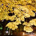 Photos: _DSC3201