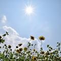 写真: 夏の空