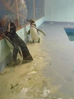 アルネ津山ペンギンと奇跡の海の大冒険 (4)