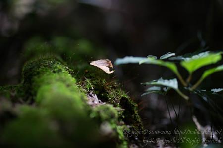がんばる苔
