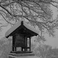 写真: 冬の社
