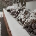 写真: 冬
