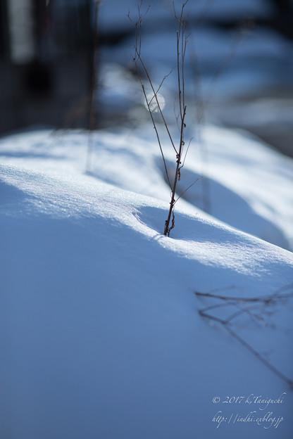 写真: 雪の中に