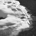 写真: 名残雪