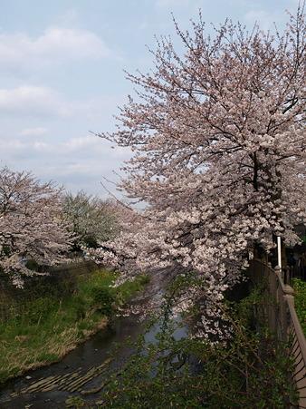 恩田川25