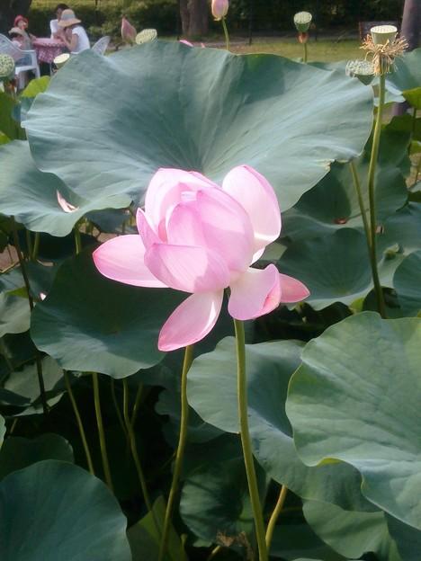 先週末、千葉公園で観ました。心が洗われるような色。