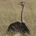 アフリカの動物ポートレイトシリーズ30