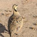 Photos: アフリカの動物ポートレイトシリーズ41