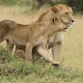 Photos: アフリカの動物Loveryシリーズ5
