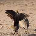 写真: アフリカの動物Loveryシリーズ9
