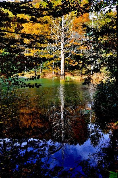写真: 青の池 1