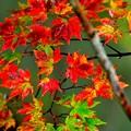 写真: 秋色木の葉 1