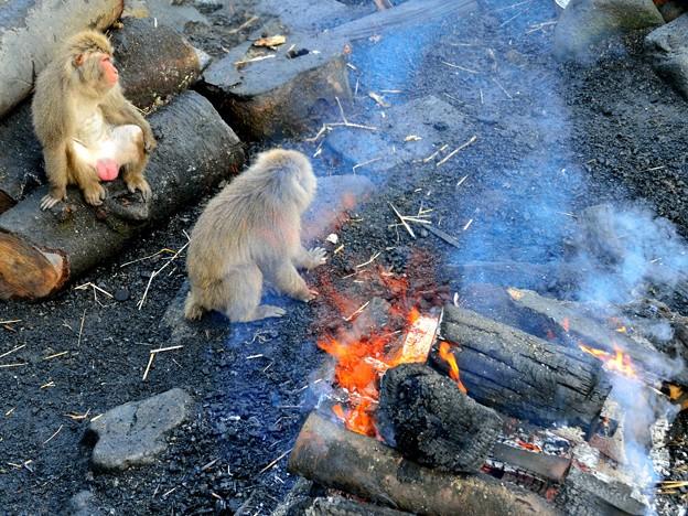 写真: サルも去って 3