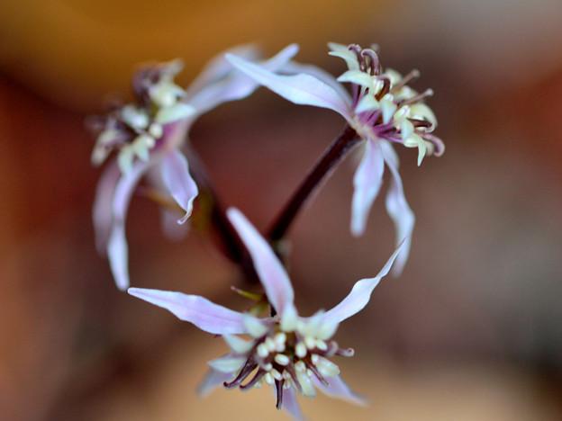 Photos: 両性花