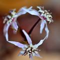 写真: 両性花