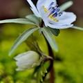 写真: 小さな春の開花