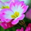 写真: 春一番