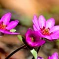 写真: 春風に誘われて