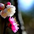 写真: 気ままに咲く花