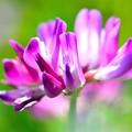 写真: 春は紫