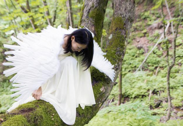 天使のいる森