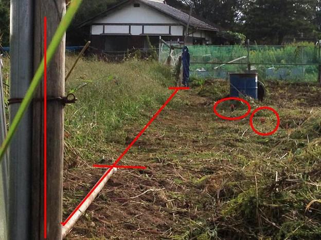 20141004午後の畑、少し作業ス、 5(13)