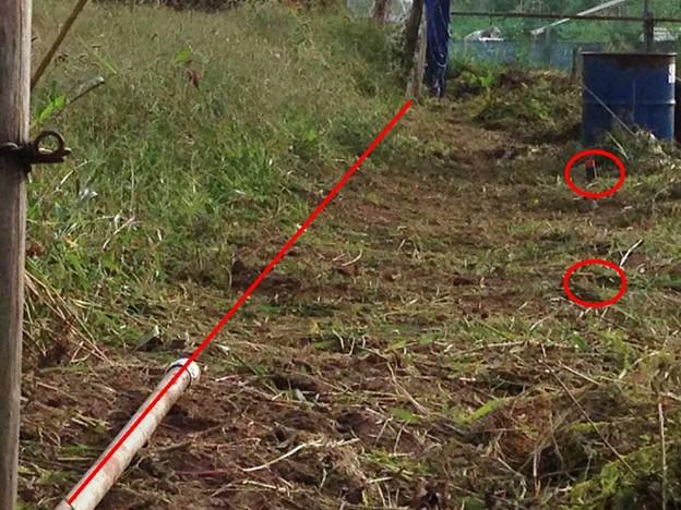 20141004午後の畑、少し作業ス、2 (6)