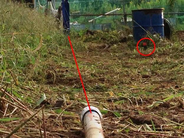 20141004午後の畑、少し作業ス、3 (7)
