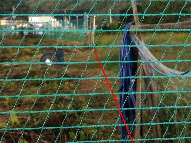20141004午後の畑、少し作業ス、4 (11)