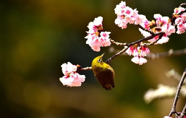写真: 花見