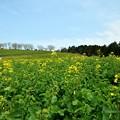 写真: 春を独り占め