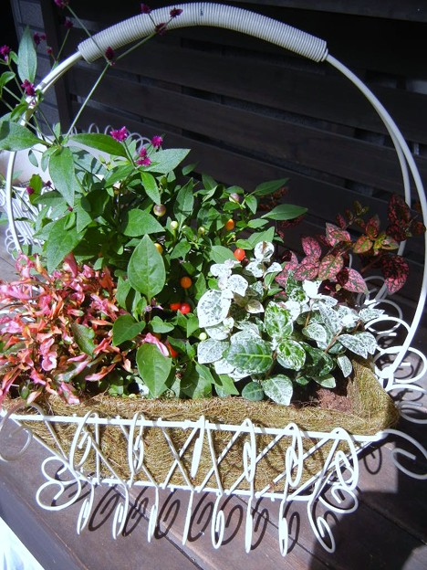 アイアンバスケットの秋の寄せ植え