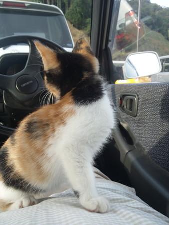 車中のミコ
