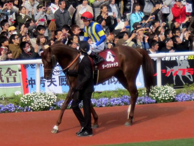 ダークシャドウと戸崎圭太騎手