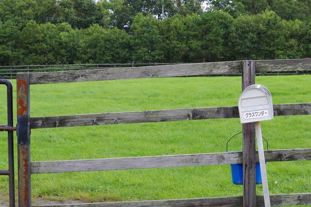 グラスワンダーの放牧場