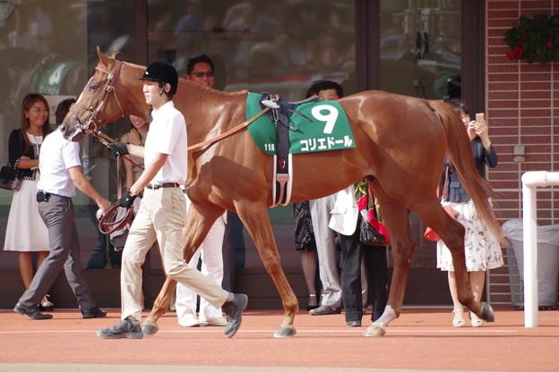 コリエドール まだ緩い感じも好馬体