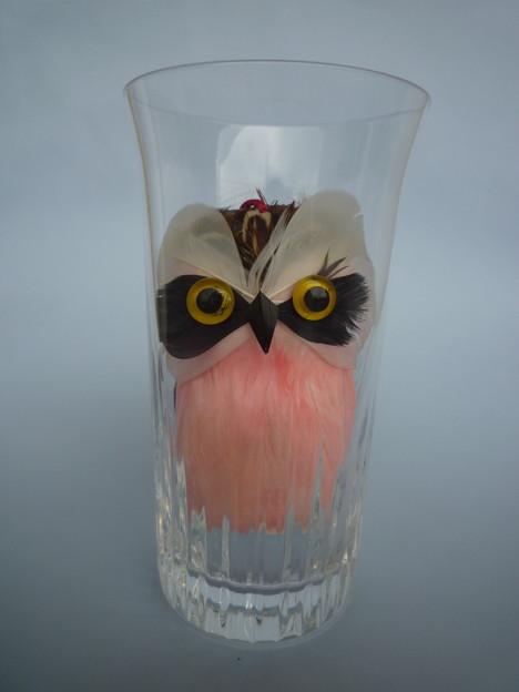 窮屈でちょっと不機嫌 An owl looks displeasd in a glass