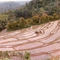 バリ島の棚田美 Bukit Jambul Rice Terrace,Bali