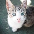 Photos: 君の名はマルコ、セルビア Stray Cat Marco in Kraljevo
