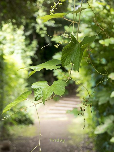 Photos: 静かな夏