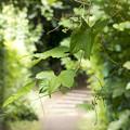 写真: 静かな夏