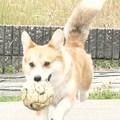写真: ボール遊び1