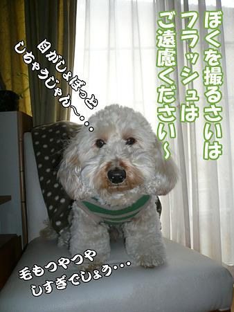くーかい家族記念日二周年 こぼれ写真 1